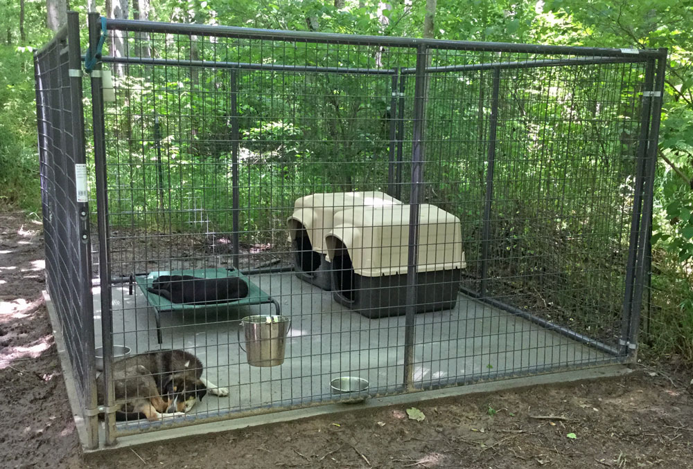 Some Residents Relaxing in their New Digs