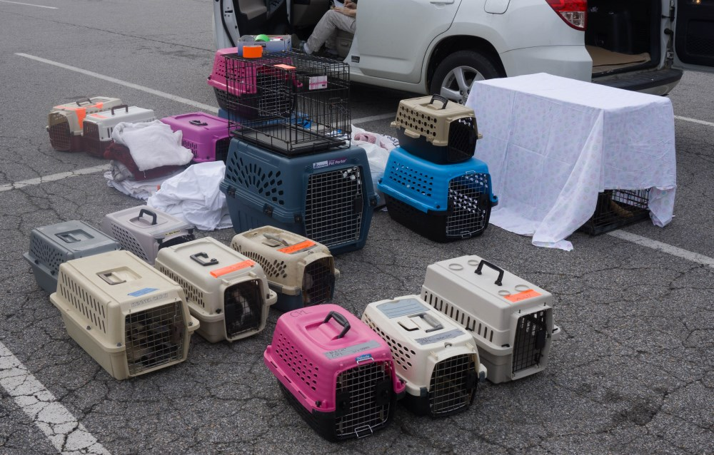 Spay and Neuter Clinic – July