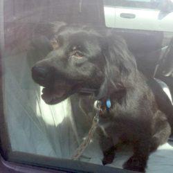 Blackie II heads to NJ