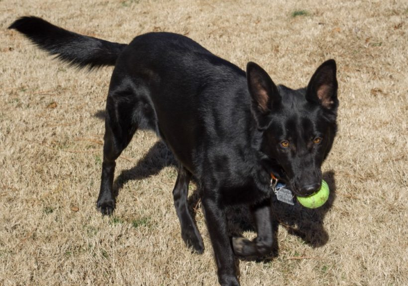 Molly – Adopted